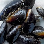 how to store live mussels