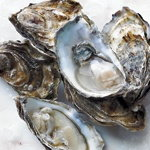 oysters packshot