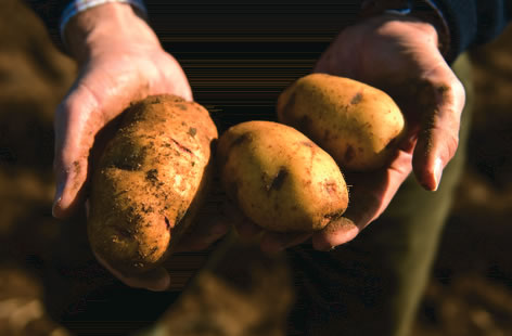 Mayan%20Queen%20potatoes-767fb967-3202-4