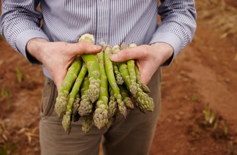 Asparagus farming in Herefordshire