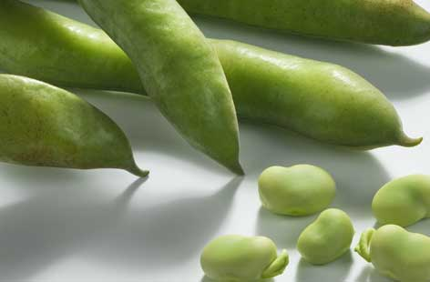 Broad Bean hero